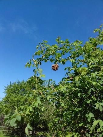 oak app3